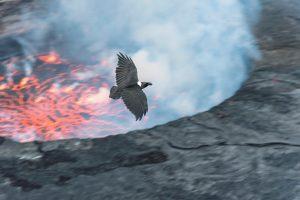 Un'aquila sorvola il fumante lago di lava all'interno del cratere del Nyiragongo